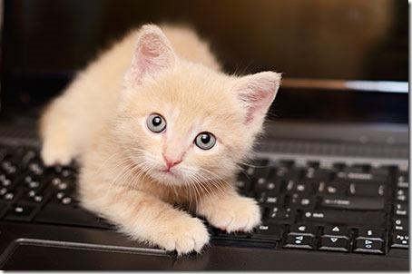 A cute kitten to cut through the gloom