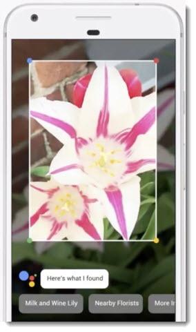 Google Lens - identify a flower