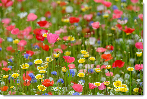Spring wildflowers & a strained analogy to Windows shortcuts