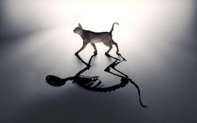 Cortana Daily Briefing & Schrodinger's Cat